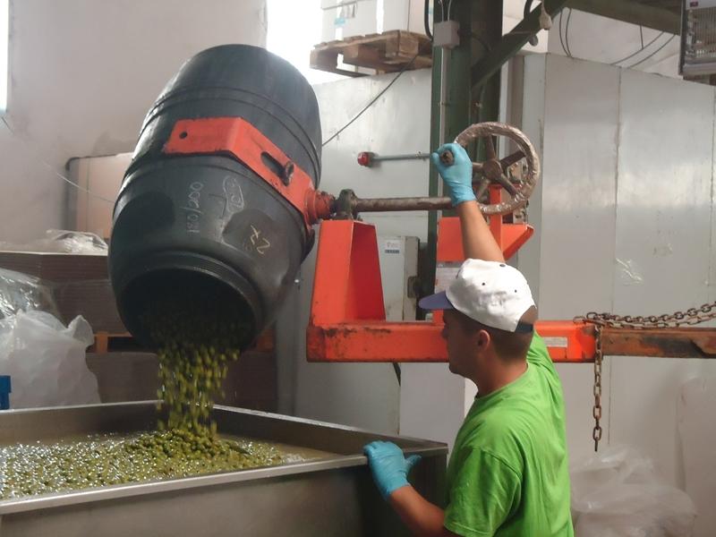 Vertido de olivas en envasadora